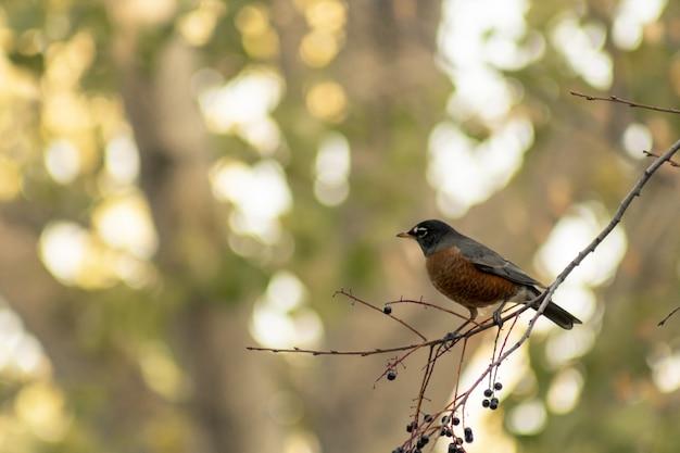 Foto com foco seletivo de um pássaro em um galho de árvore com um fundo desfocado