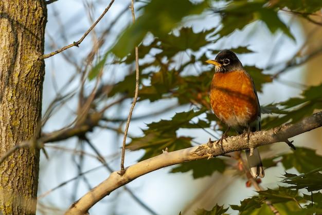 Foto com foco seletivo de um pássaro sentado em um galho de árvore com folhas