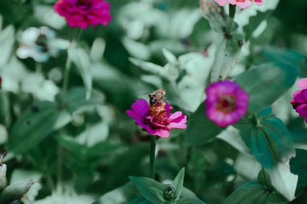 Foto com foco seletivo de uma abelha em uma flor roxa