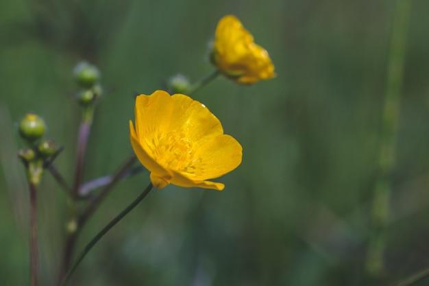 Foto com foco seletivo de uma bela flor amarela em um campo capturada em um dia ensolarado