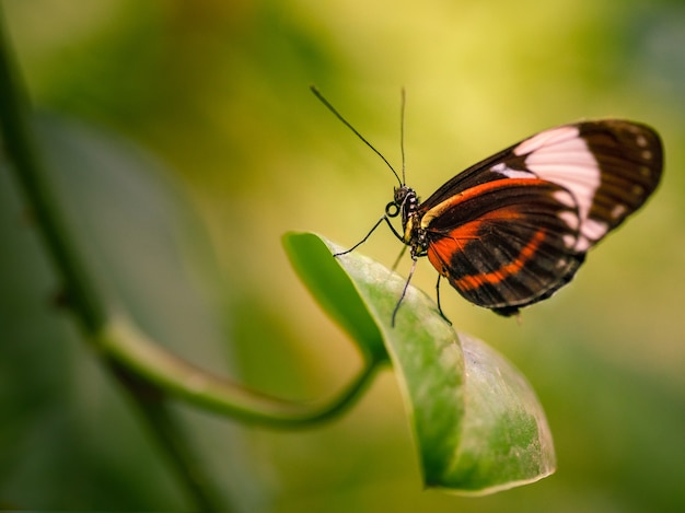 Foto com foco seletivo de uma linda borboleta em uma folha verde