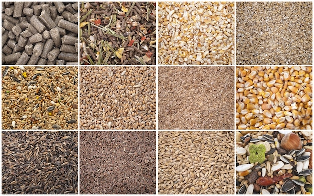 Foto composta de cereais para ração animal