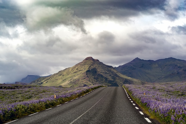 Foto da paisagem de uma estrada em um campo de lavanda levando a colinas