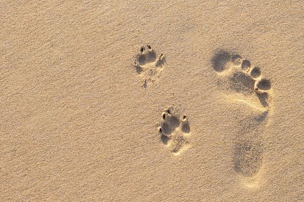 Foto da pegada humana ao lado da pegada do cão na praia tropical