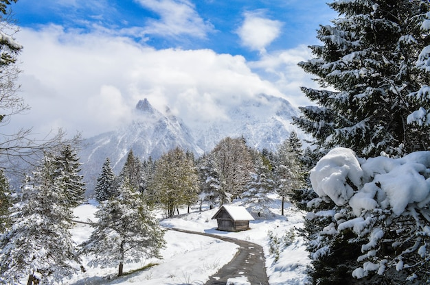 Foto de alto ângulo de belas árvores cobertas de neve, cabanas e montanhas