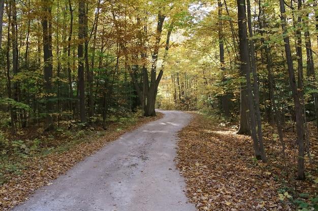 Foto de alto ângulo de um caminho na floresta com folhas caídas no chão no outono