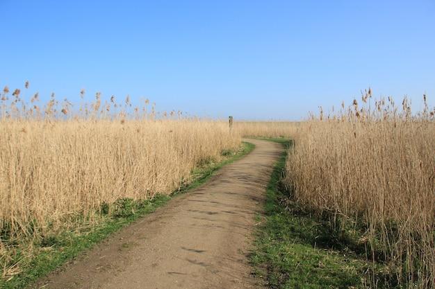Foto de alto ângulo de um caminho no campo de trigo com o céu azul ao fundo