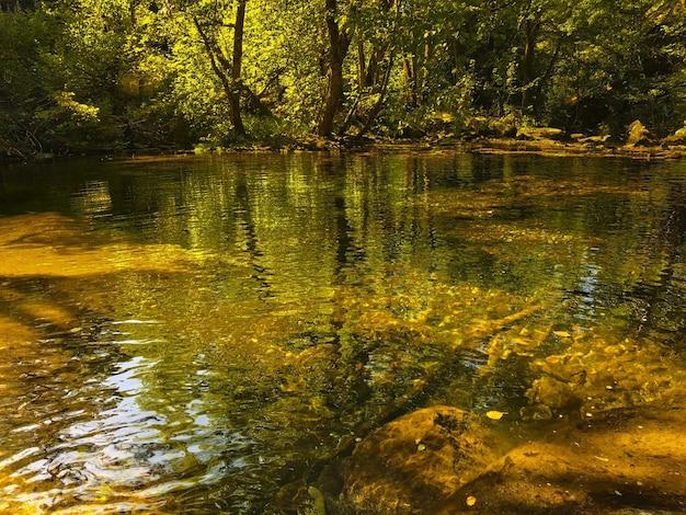 Foto de alto ângulo de um lago na floresta com reflexos de árvores na água