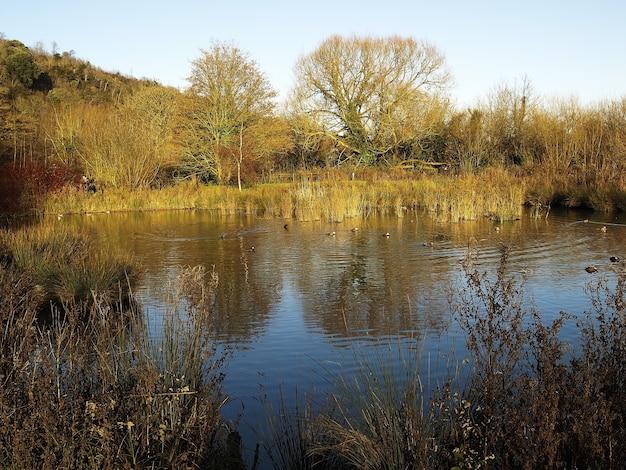Foto de alto ângulo de um lindo lago cercado por árvores no outono