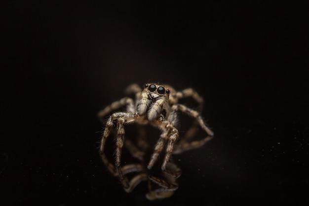 Foto de alto ângulo de um salticidae assustador em uma superfície preta