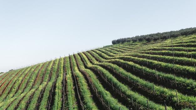 Foto de alto ângulo de uma área agrícola com linhas de plantas semelhantes