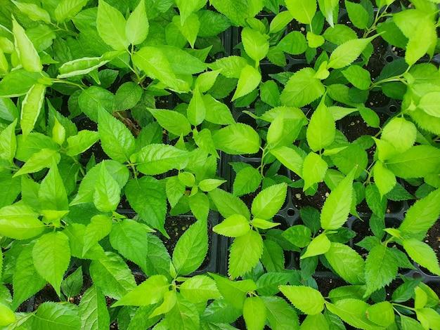 Foto de alto ângulo de uma planta com muitas folhas verdes
