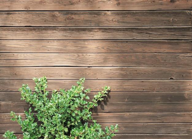Foto de alto ângulo de uma planta verde em uma superfície de madeira