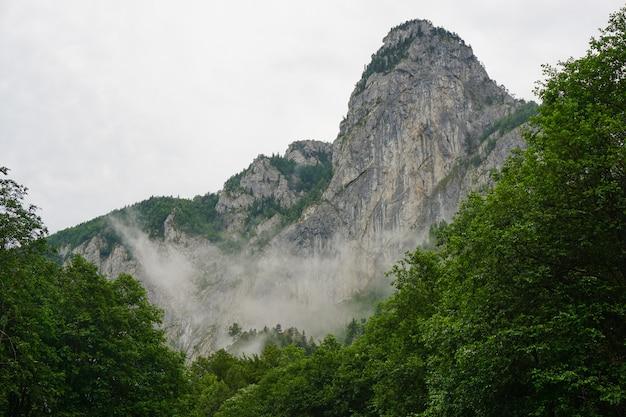Foto de ângulo baixo de uma montanha rochosa com nevoeiro contra um céu nublado com árvores no primeiro plano