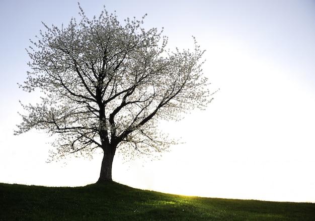 Foto, de, árvore, silueta, campo