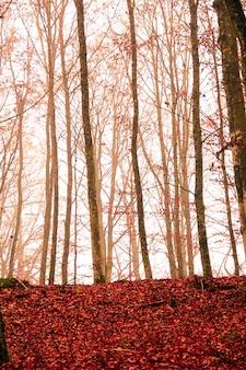 Foto de árvores nuas