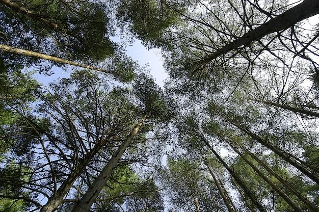 Foto de baixo ângulo das belas árvores altas com folhas verdes sob o céu claro