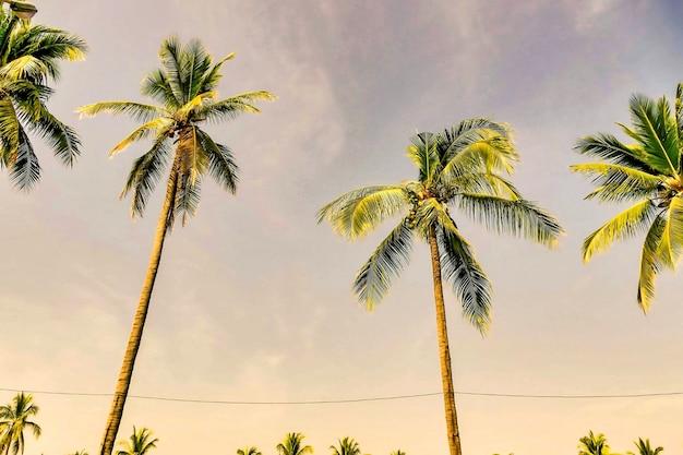 Foto de baixo ângulo das belas palmeiras sob o céu cinza do pôr do sol