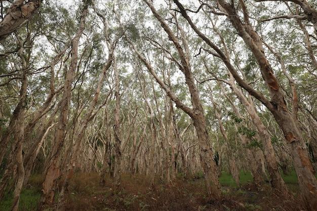 Foto de baixo ângulo de árvores altas seminuas em uma floresta