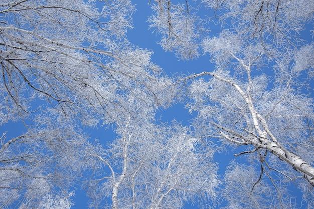 Foto de baixo ângulo de árvores cobertas de neve com um céu azul claro no