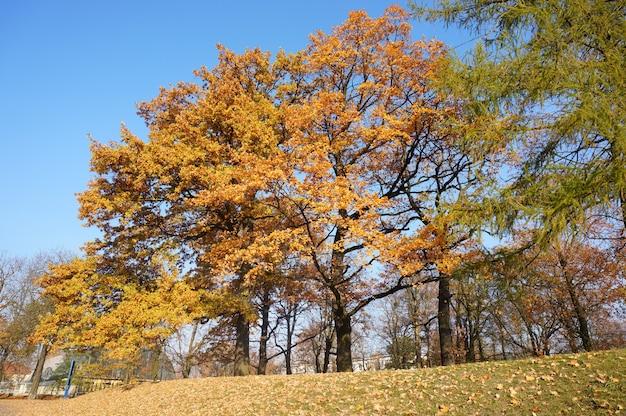 Foto de baixo ângulo de árvores de outono com folhas amarelas contra um céu azul claro em um parque