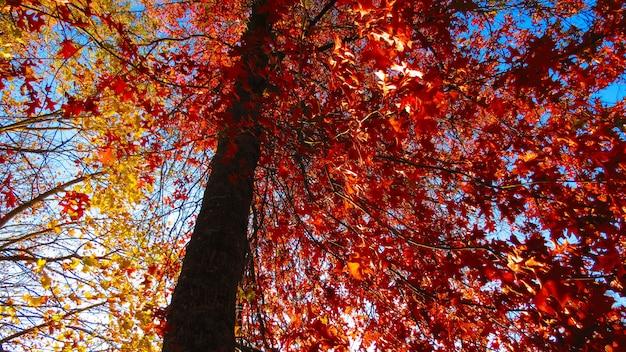 Foto de baixo ângulo de folhas vermelhas de outono em uma árvore