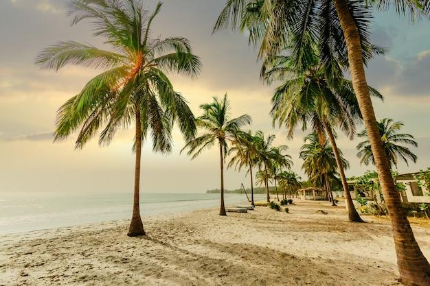 Foto de baixo ângulo de palmeiras em uma praia de areia perto de um oceano sob um céu azul ao pôr do sol