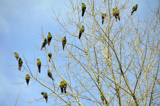 Foto de baixo ângulo de pássaros empoleirados nos galhos nus de uma árvore