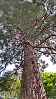 Foto de baixo ângulo de um pinheiro com muitos galhos e agulhas durante a primavera