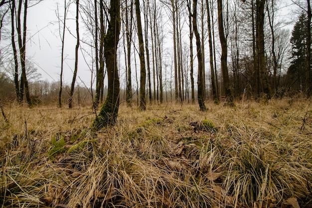 Foto de baixo ângulo de uma floresta assustadora com um ambiente nebuloso