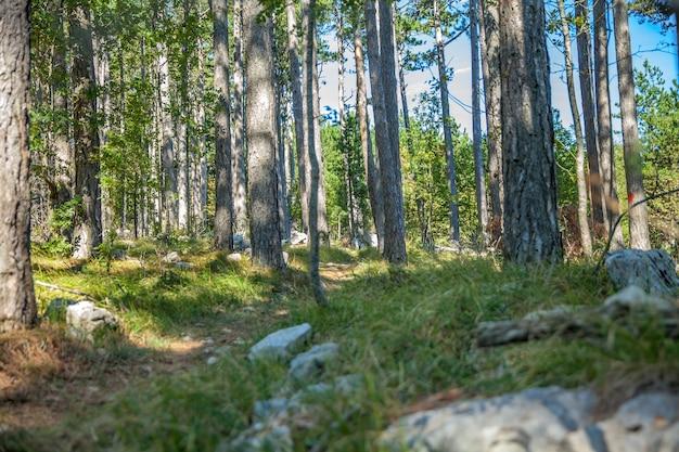 Foto de baixo ângulo de uma floresta na eslovênia