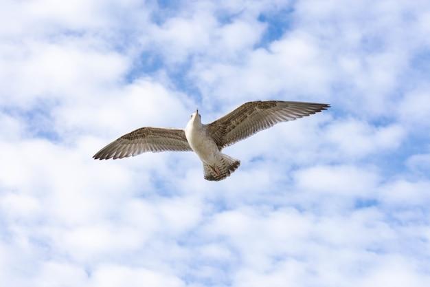 Foto de baixo ângulo de uma gaivota voadora de patas amarelas com céu nublado ao fundo