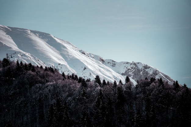 Foto de baixo ângulo de uma montanha coberta de gelo com árvores alpinas em primeiro plano