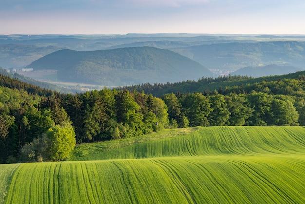 Foto de bela paisagem de campos verdes nas colinas, rodeadas por uma floresta verde