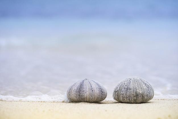 Foto de close de dois ouriços do mar na praia em um dia ensolarado