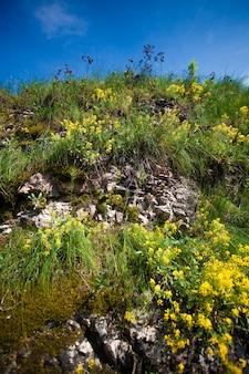 Foto de close de grama e flores crescendo na montanha