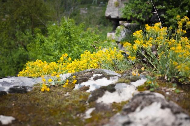 Foto de close de grama e flores em um penhasco alto