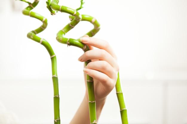 Foto de close de mulheres bonitas segurando bambus