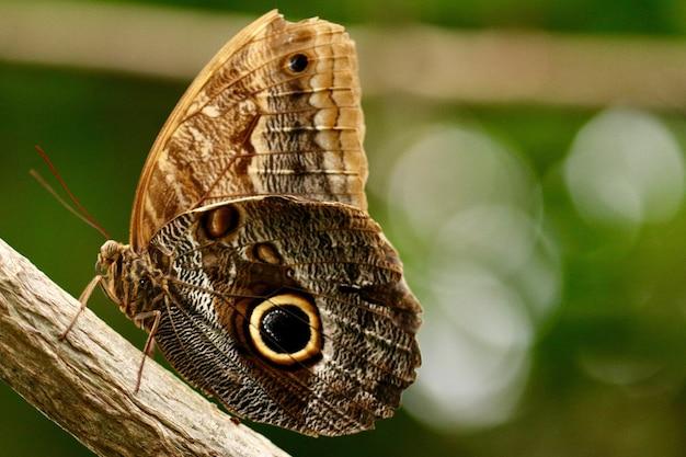 Foto de close de uma linda borboleta