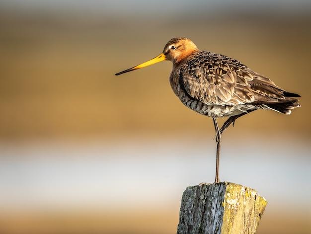Foto de close-up com foco raso de um pequeno passarinho de pé sobre uma perna em um poste de madeira