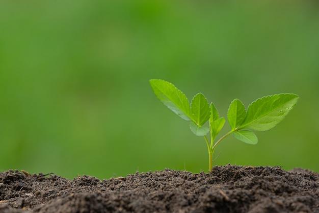 Foto de close-up da muda da planta crescendo
