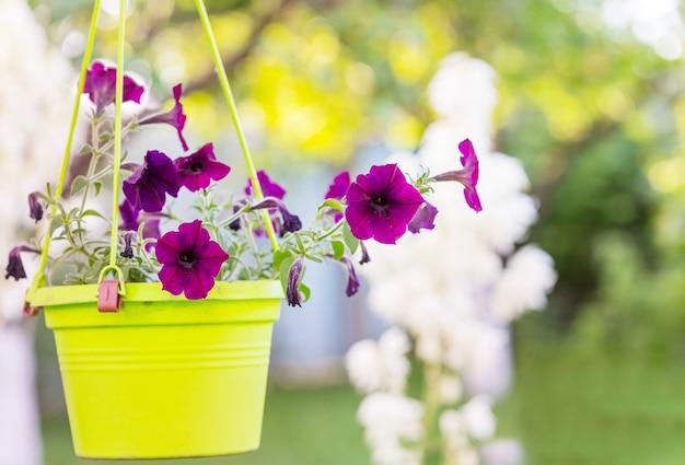 Foto de close-up das belas flores.