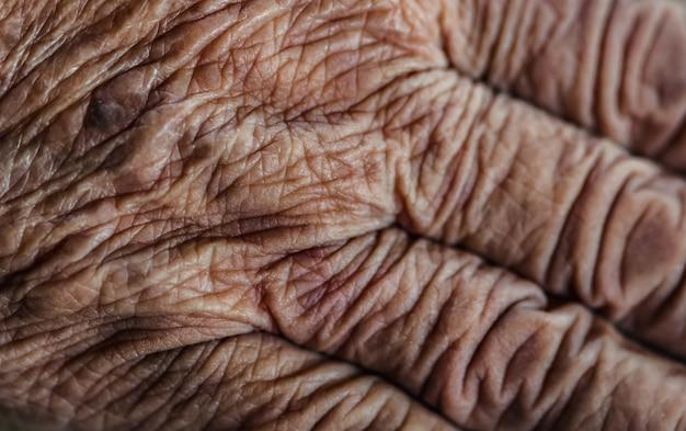 Foto de close-up das pessoas de pele sênior enrugada.