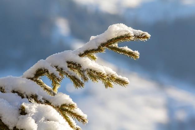 Foto de close-up de branche de pinheiro com agulhas verdes cobertas com neve limpa fresca e profunda