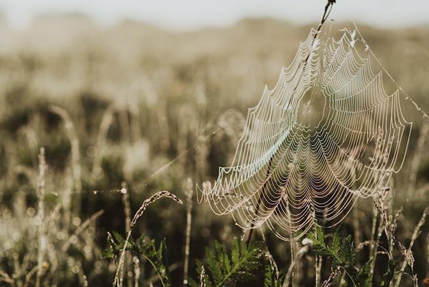 Foto de close-up de grama verde fresca em um campo com gotas de orvalho matinais e uma teia de aranha
