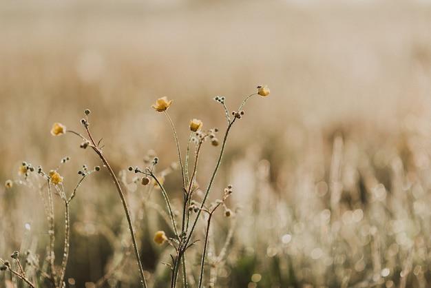 Foto de close-up de grama verde fresca em um campo com gotas de orvalho matinais Foto Premium
