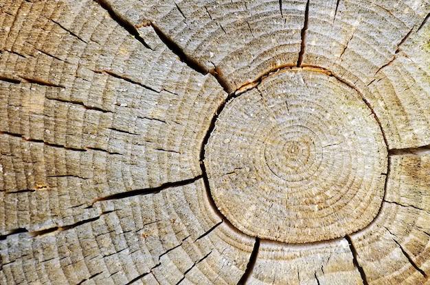 Foto de close-up de textura de fundo de madeira velha com anéis e rachaduras