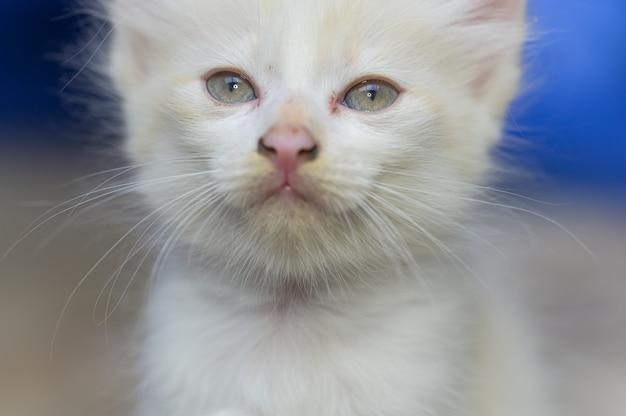 Foto de close-up de um gatinho fofo