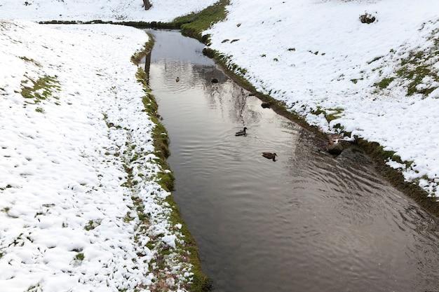 Foto de close-up de um rio estreito no inverno. na costa fica a neve branca após uma nevasca. na água flutuam patos