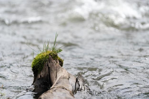Foto de close up mostrando um tronco de árvore coberto de vegetação em ambiente de floresta natural